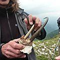 P1060142 Intérieur de la corne de chamois