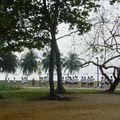 ac_singap (662)