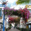 01 Voyage à Grande Canaria, avril 2008