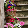 Flowers on stairs