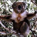 Australian dangers: australian tv ii