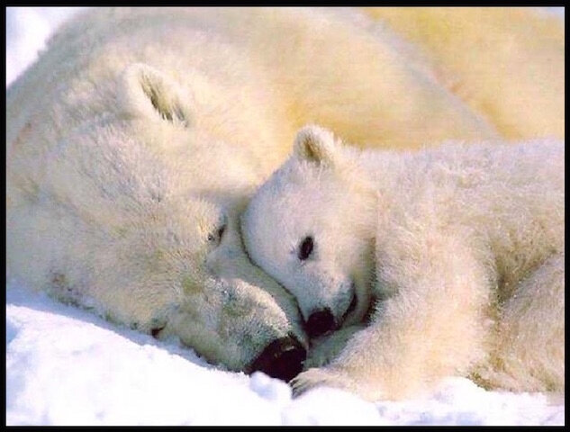 ours blanc tendresse 3