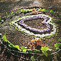 lumière du soir sur coeur de paulownia yurtao