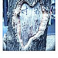 Coeur arbre_1470485576952