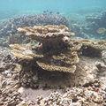 corail-ST-Leu
