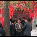 Campagne du Shandong Jour de fêtearbre à voeux