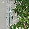 Windows-Live-Writer/Dams-mon-jardin_C73C/DSCN1344