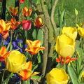 Tous les mois au jardin.....et à la campagne!