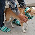 Calcetines con perro a juego