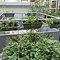 Opération jardin aromatique