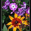 Les fleurs du jardin et sauvages