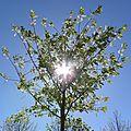 arbre_lumiere