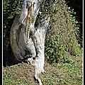 Forêt (Large)