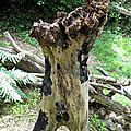 vénus yurtus yurtao