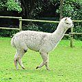 Une visite extraordinaire : la filature de la vallée des saules et les laines #lilyneige