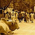 12 - Inde du Sud