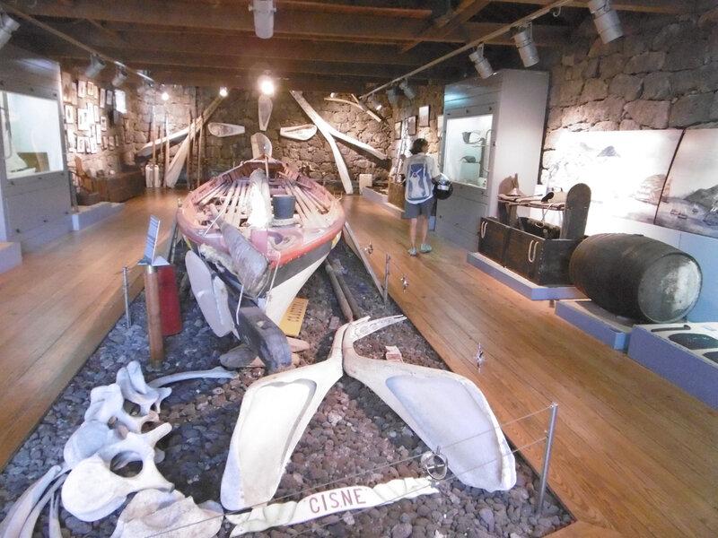 musée baleine Lajes PICO (1)
