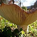 champignon-05884 (9)