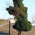 Un arbre couvert de lierre