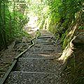 Manoa Falls Trail (224)