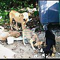 Manon Maya Belle - chienne et chiots campêche 1