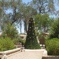 San Pedro de Atacama, arbre de Noël