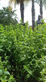 vue depuis le jardin des plantes aromatiques