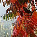 L'arbre rouge - marguerite brunat-provins