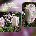 balanicole_2016_05_avril tulipes_31_les demoiselles d'honneur