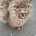 [grif'auteurs] je suis le chat de saint lo par emmanuelle marais