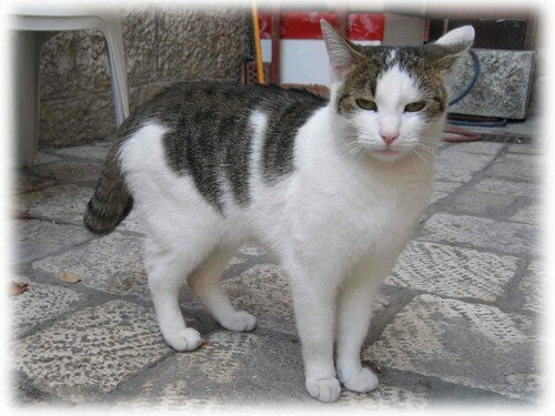 chat Trogir 3 album