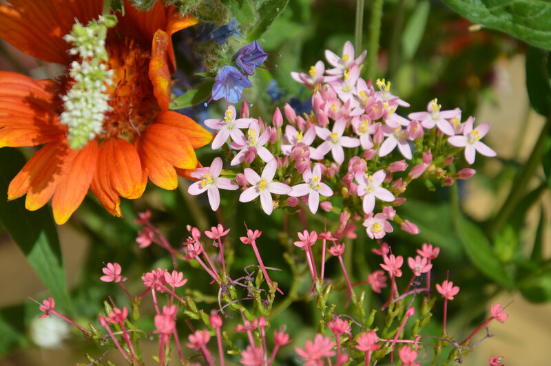 centaury_bouquet_marionfleurs