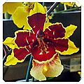 20150321_112823_HDR A