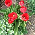 petite ballade de printemps