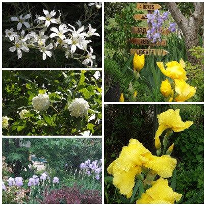 Jardin au 23 mai 2018 (5)