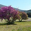 Epidaure, un théâtre monumental