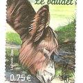 FRANCE - Le Baudet