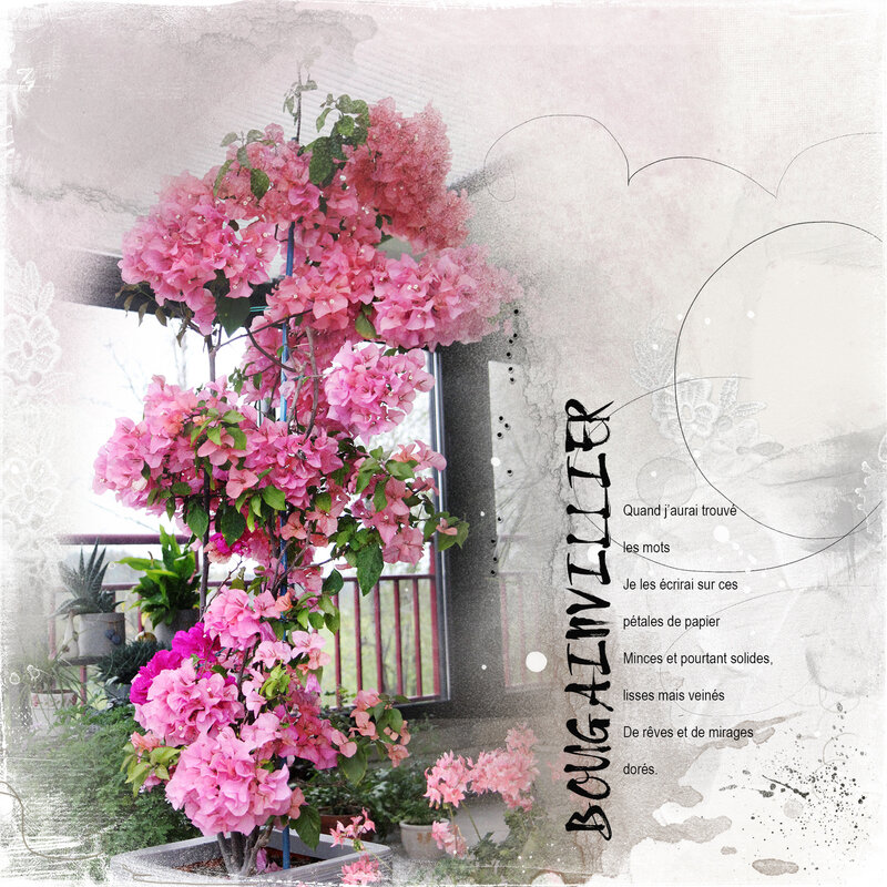 Bougainvillier - AASPN_8X8ArtsyTemplateAlbum1_2and3