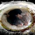 Que deviennent les souris par ce temps de neige?