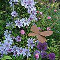 clématite et le papillon