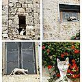 La légende des chats de la romieu