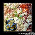 Nudibranche 08