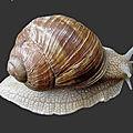 La symbolique de l'escargot