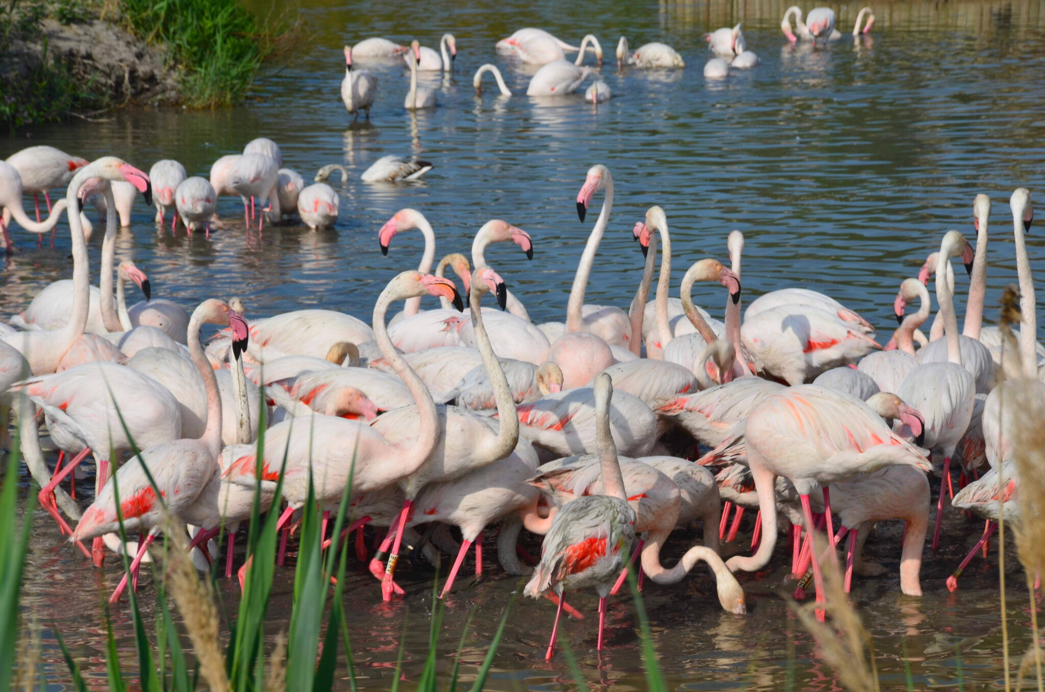 #EnFranceAussi, on aime les étangs de Camargue