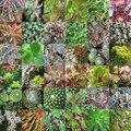 Succulentes 1