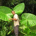 des feuilles énormes