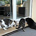 Les chats du quartier