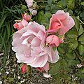 fleurs-roses-2 (32)