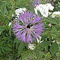 fleurs-de-breche (43)