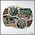 Pairi daiza 2014 -les cactus de l'oasis